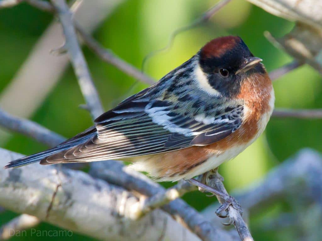 Bird Watching near Devil's Lake State Park